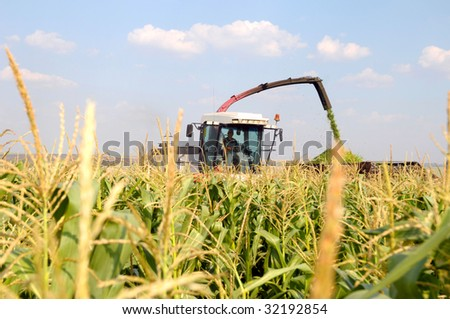 combine reaps a crop of corn - stock photo
