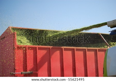 Combine Transferring Cut Silage to Feed Trailer - stock photo