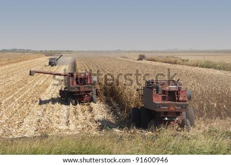 Combines harvest dry corn. - stock photo
