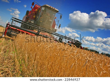 combines harvest grain on the field - stock photo