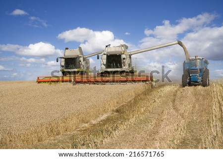 Combines harvesting wheat and filling trailer in sunny, rural field - stock photo