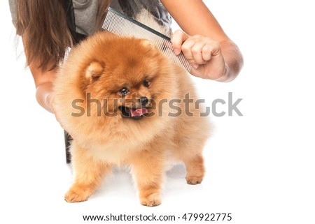 Combing a dog on white background