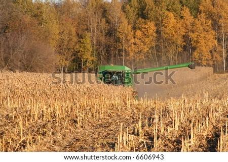 combining corn in autumn - stock photo