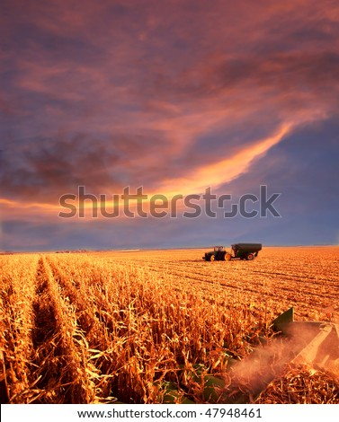 combining corn in field under sunset skies - stock photo