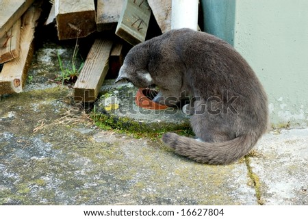Come out of there, Little mouse - stock photo