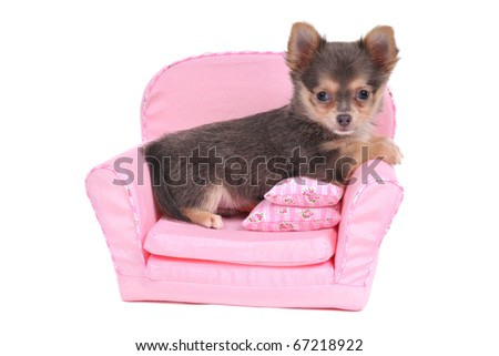 Comfy Bed for a small puppy - stock photo