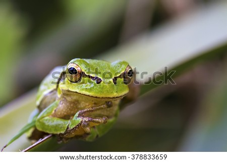 comic frog nature background