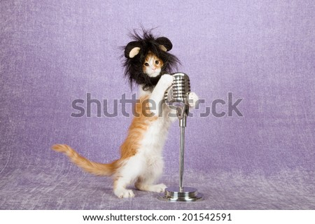 Comical funny kitten with black lion cap wig standing on hind legs holding onto fake vintage microphone on stand, on light purple lilac background