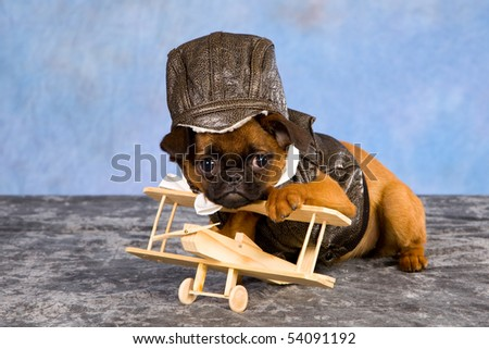 Comical Griffon puppy with leather jacket and cap with miniature wooden plane - stock photo