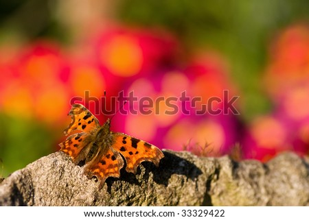 Comma butterfly against a bright flower background - stock photo