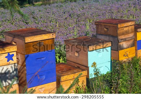 Commercial beehives used to pollinate a field of borage.