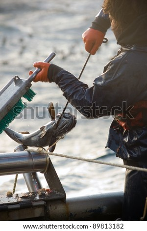 Commercial Fisherman with Catch 3 - stock photo