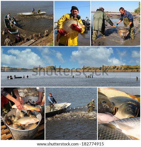 Commercial Fishing. Fishing Industry. Fishermen at work. Collage of photographs showing workers harvesting carp fish from a fish farm.  - stock photo