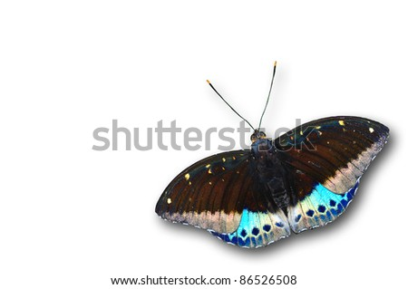 common archduke purple butterfly color isolated on white - stock photo