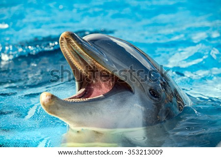 Common dolphin portrait while looking at you with open mouth - stock photo