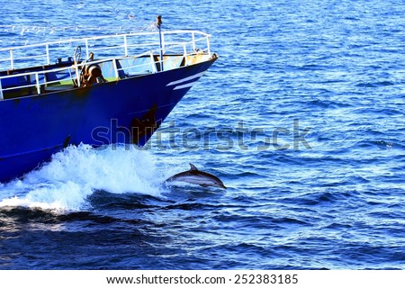 Common dolphins jumping close to the bow of a fishing boat - stock photo