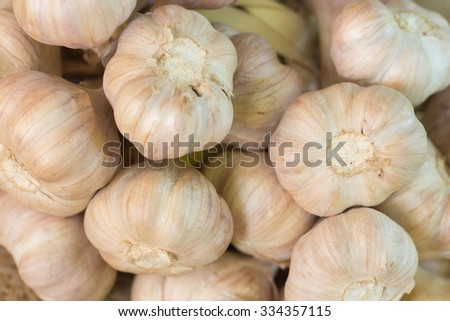 Common Garlic
