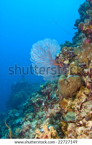 common gorgonian sea fan on variety of colorful coral of great barrier reef, australia
