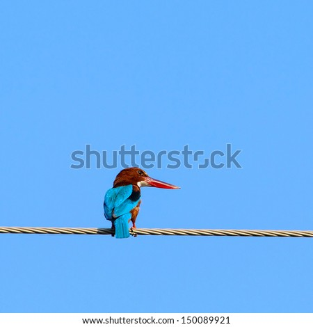 Common Kingfisher (Alcedo Atthis) on the wire - stock photo