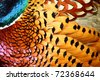Common Pheasant feathers - stock photo