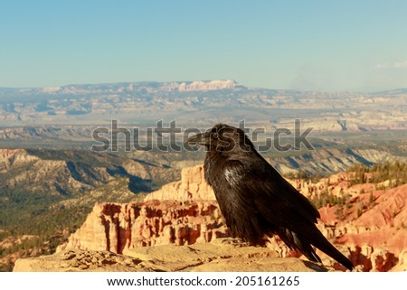Common Raven (Corvus corax) perched on stone wall at Bryce Canyon National Park - stock photo