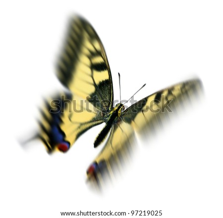 common swallowtail (Papilio machaon) in flight, wings showing motion blur - stock photo