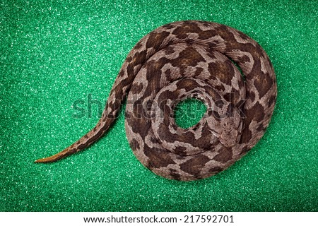 Common viper snake isolated on green  - stock photo