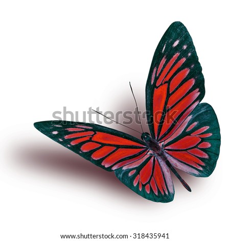 Common Wanderer (Pareronia anais) the beautiful flying red butterfly on white background with soft shadow beneath - stock photo