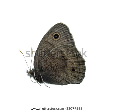Common wood nymph butterfly isolated on white