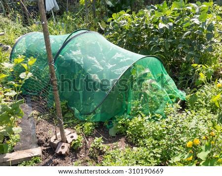 community allotment garden with mini-greenhouse - stock photo