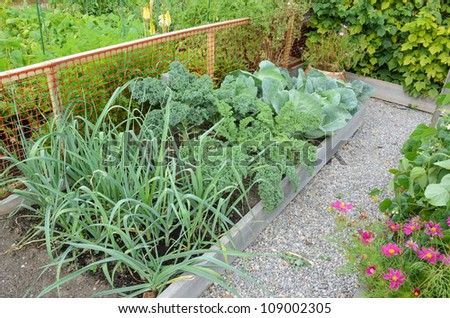 Community allotment gardens with vegetables - stock photo