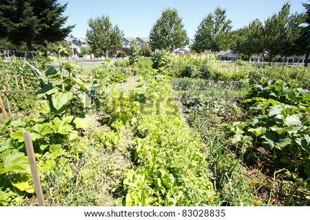 Community garden with organic vegetables.