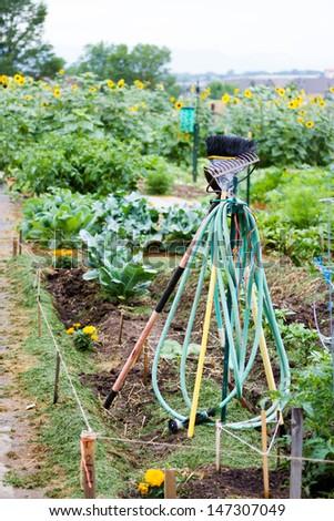 Community gardening in urban community. - stock photo