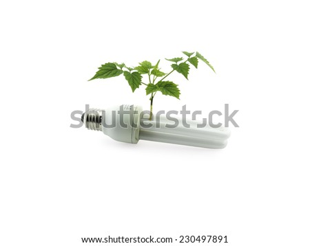 compact light bulb with green plant, green energy concept - stock photo