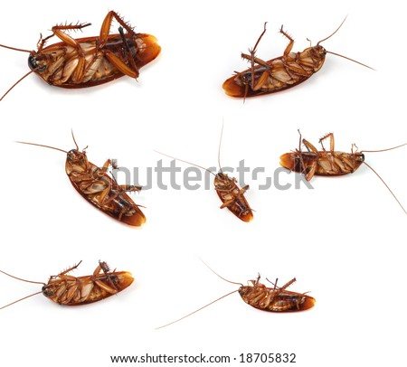 Compilation of cockroach macros - stock photo