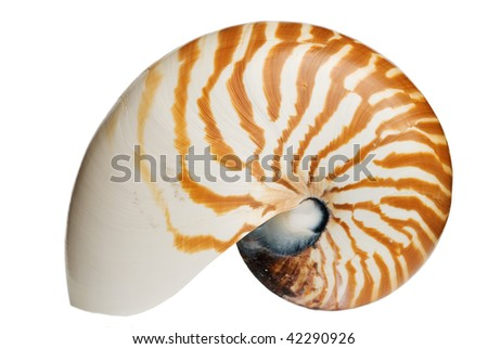 Complete Nautilus Shell