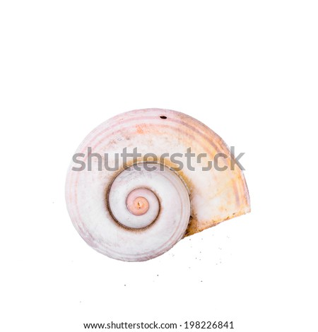 Complete Nautilus Shell on white - stock photo