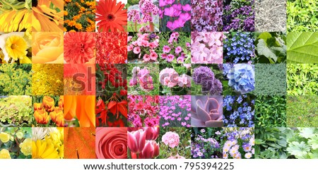 Composite color chart collage of a large variety of flowers and plants.