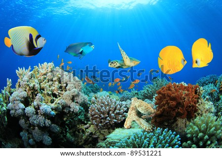 Composite Image of Butterflyfish, Angelfish, Parrotfish and Sea Turtle on a Coral Reef - stock photo