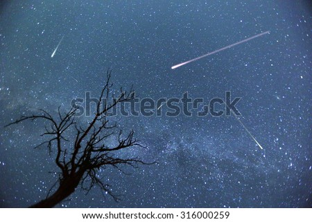 Composite image of shooting stars with a silhouette of a small tree during the 2015 Perseid Meteor Shower.  - stock photo
