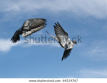 Composite of a beautiful pigeon in flight - stock photo