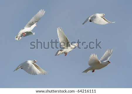 Composite of a beautiful white dove in flight - stock photo