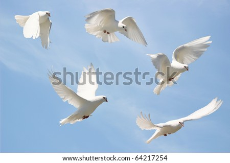 Composite of a beautiful white dove in flight, blue sky background - stock photo