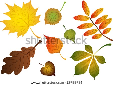 "Composite of various autumn leaves: birch, maple, oak, rowan, lime, chestnut, poplar, aspen. Vector version of this image (""*.eps"") also available in my portfolio. - stock photo"