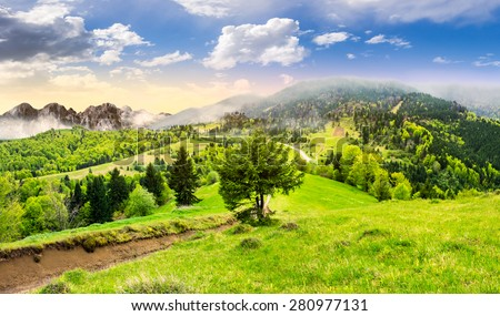 composite summer landscape. fog in conifer forest surrounds the castle on mountain hill with path in morning light