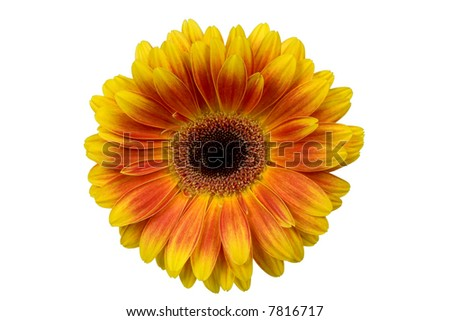 Composition from flowers on a white background