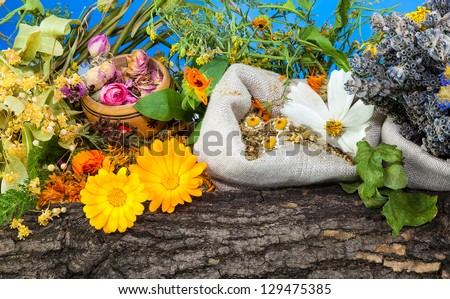 Composition from herbs with bark - stock photo