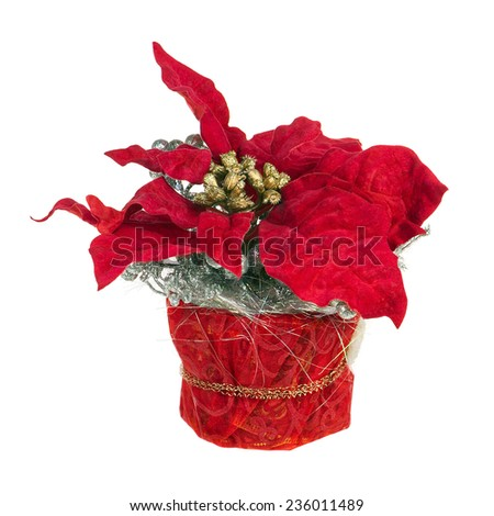 Composition from Poinsettia Plant with branches, pine cones, ribbons and balloons in vase isolated on white background. Closeup. - stock photo