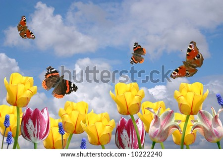 Composition from spring flowers and butterflies on a background of the cloudy sky. - stock photo