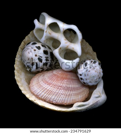 composition made from seashells - stock photo